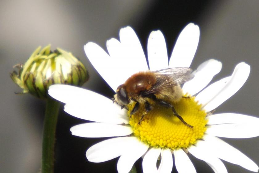RFID technology helps figure out colony collapse in bees